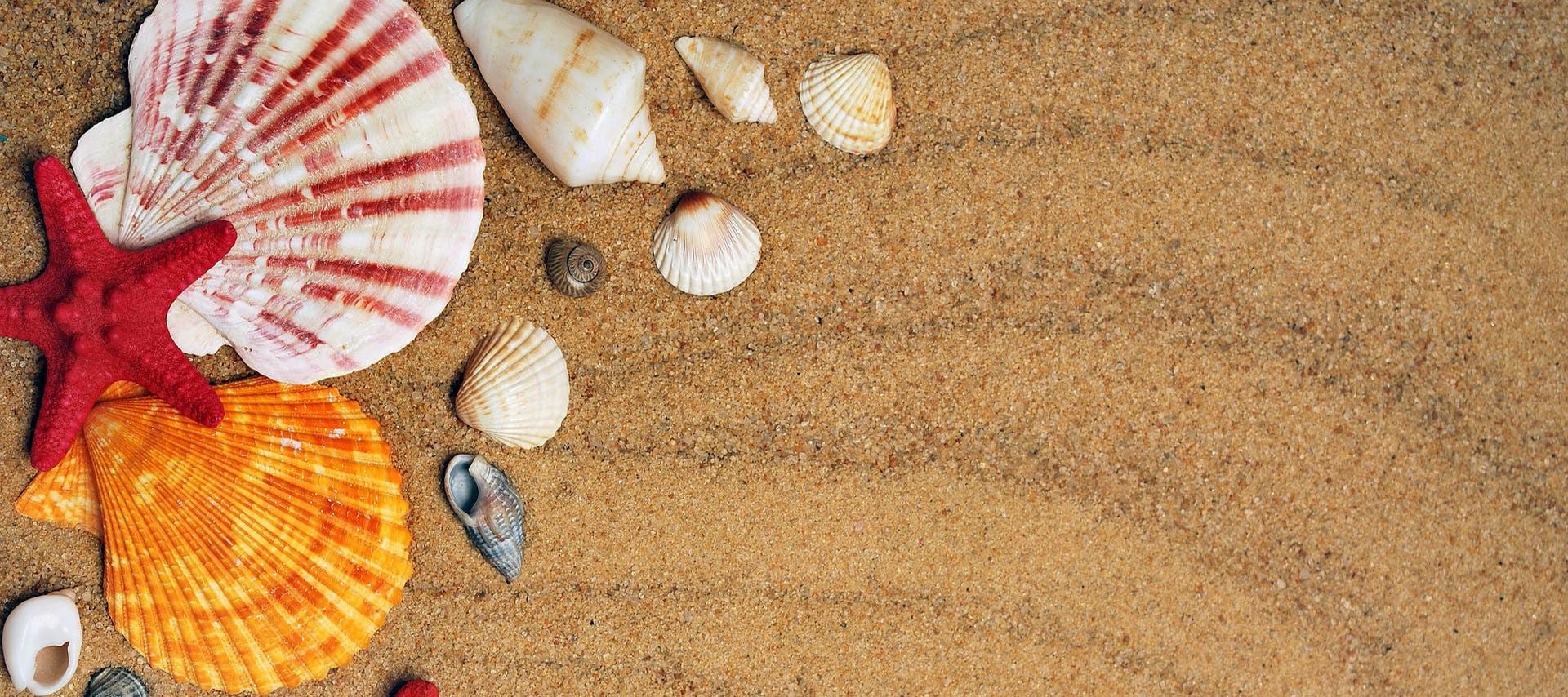 pláž a mušle